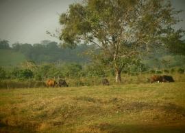 Visitando a Doña Morelia