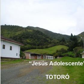 totoro-2778.png
